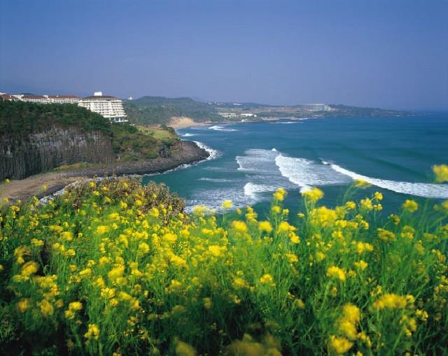 Vé máy bay đi Jeju giá rẻ