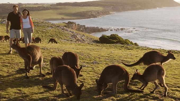 5 lý do nên đến đảo Kangaroo, Úc