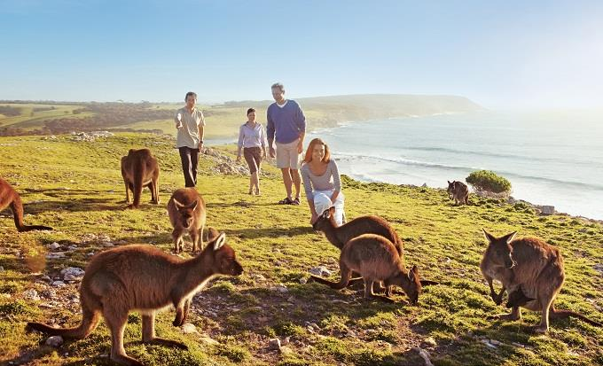 Ghé thăm Đảo Kangaroo