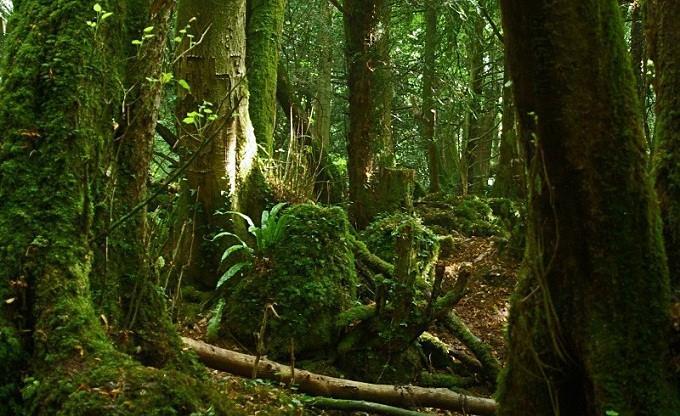 Khu rừng mê cung ở Anh