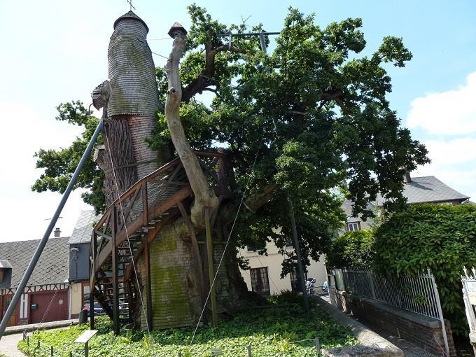 Cổ kính nhà thờ Cây Sồi ở Pháp