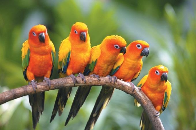 Vườn Chim Jurong - vương quốc các loài chim lạ