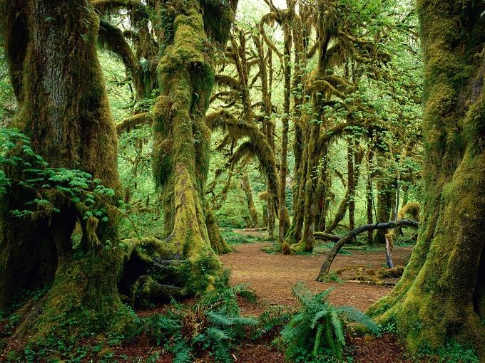 Thăm Vườn Quốc gia Olympic, bang Washington, Mỹ