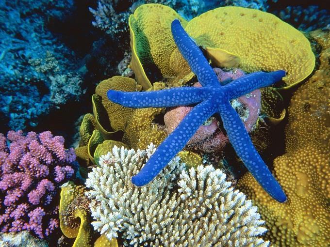 Great Barrier – rạn san hô ngầm lớn nhất hành tinh