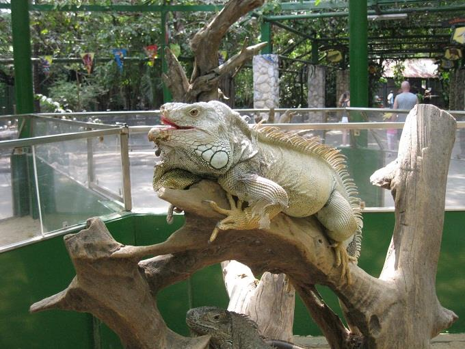 Một ngày ở vườn thú lộ thiên Thái Lan