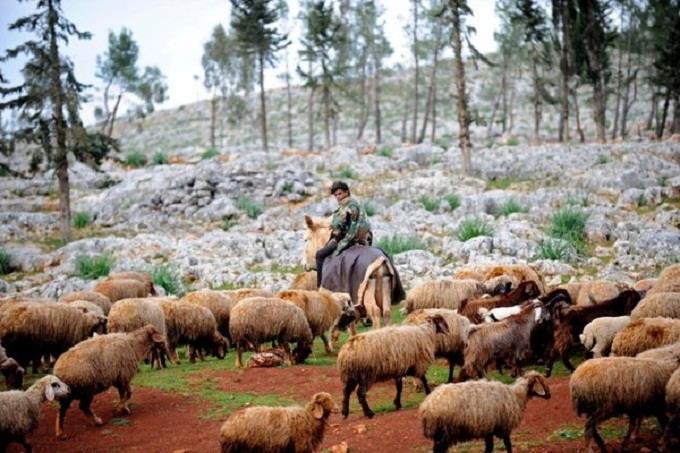 Lễ hội chăn Cừu ở Nga