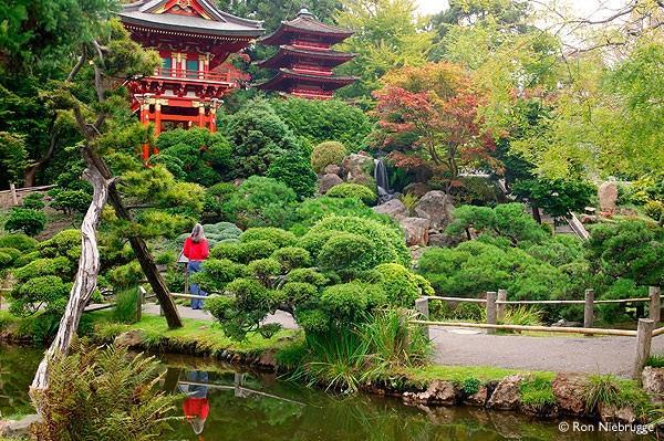 Du lịch San Francisco ngắm vườn trà Nhật Bản tuyệt đẹp