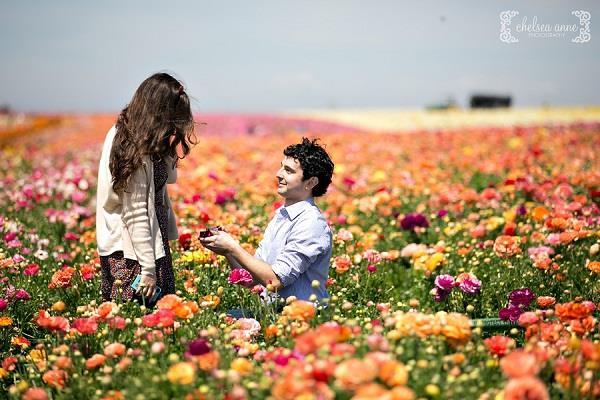 Đến Mỹ ghé thăm cánh đồng hoa Carlsbad
