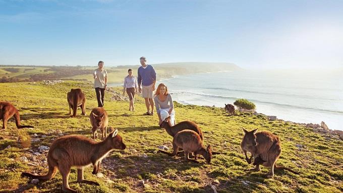 Lý do bạn không nên bỏ lỡ đảo Kangaroo, Úc
