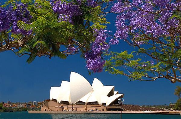 Những mùa hoa đẹp ở Úc