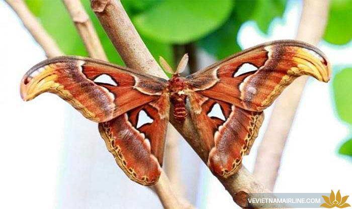 Nhìn ngắm những con côn trùng to như trong phim ở Thái Lan