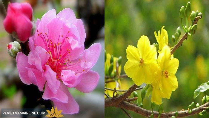 Quy định vận chuyển hoa đào, hoa mai tết 2018 Vietnam Airlines